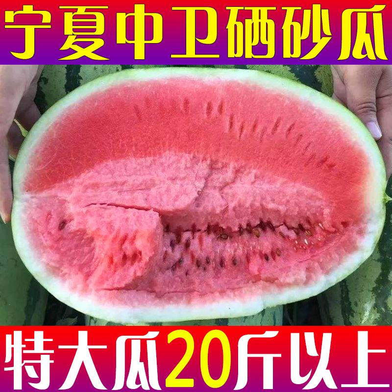 宁夏中卫富硒硒砂瓜特大20斤新鲜水果现摘现发石头缝的沙瓤西瓜甜