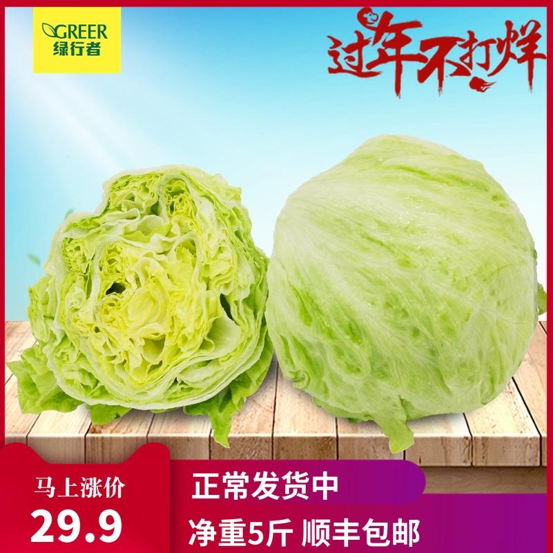 【绿行者】球生菜圆生菜5斤汉堡用生吃新鲜蔬菜即食轻食沙拉材料