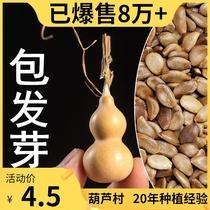 天然文玩特大小亞腰葫蘆種子籽迷你手捻小八寶葫蘆籽種子葫蘆種孑