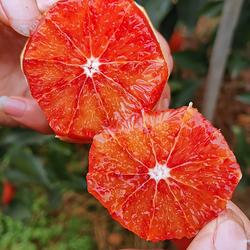 【新鲜现摘】四川塔罗科血橙 香味浓郁 果园直发 5斤 8斤