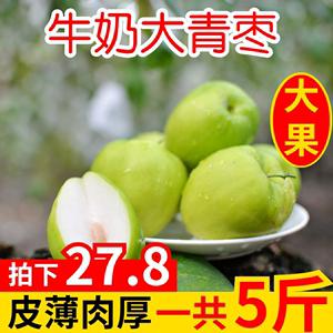 顺丰中通福建牛奶枣大青枣水果5斤新鲜枣子冬枣台湾品种东苹果枣