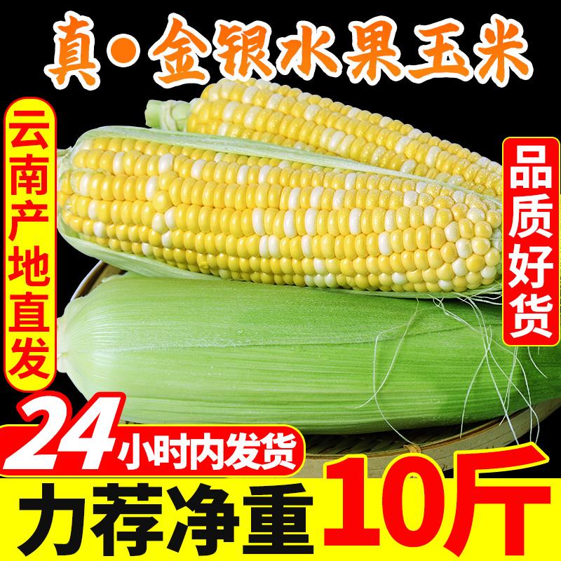 云南金银水果玉米10斤新鲜生吃甜玉米棒子粘苞谷米现摘糯包邮蔬菜