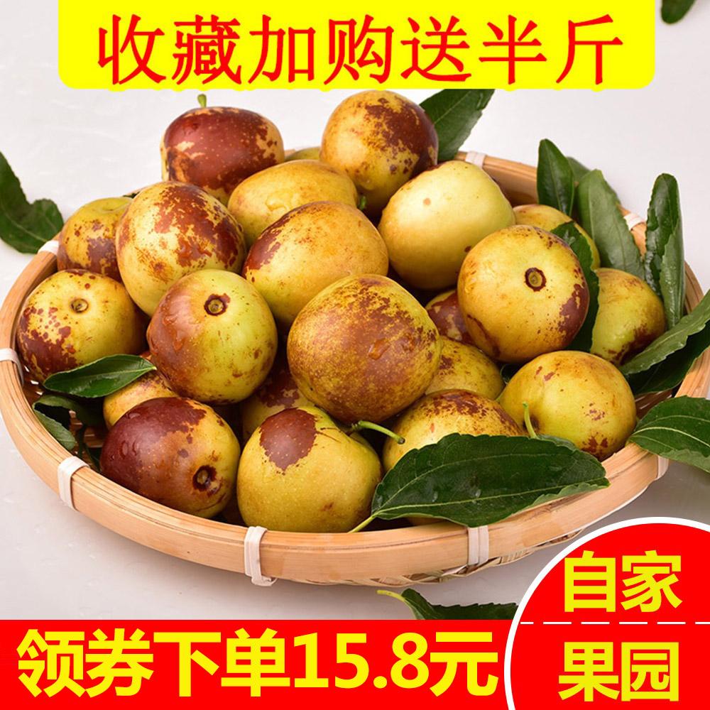 山东特产沾化冬枣新鲜包邮5斤脆甜枣子新鲜现摘实惠装水果