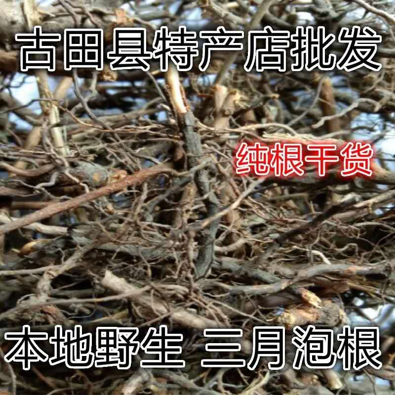 Fujian wild three-month bubble root spirodendron papyrifera bungeana bungeana snake bubble tendon red plum root elimination pure root dry goods 250g