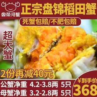 特大盘锦河蟹公4.2-3.8母3.2-2.8大闸蟹稻田螃蟹10只礼盒顺丰包邮