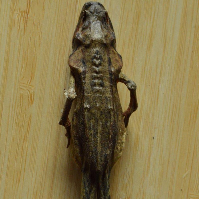 长白山亚种林蛙干雪蛤纯干小铁柱哥蛤蟆干东北吉林省产地满百包邮