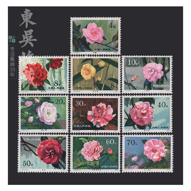 1979年 T37云南山茶花  收藏 邮票品 集邮 原胶全品