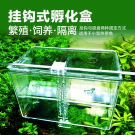 挂钩式孔雀鱼繁殖盒鱼缸孵化盒隔离盒热带鱼产卵孵化产房鱼苗幼鱼