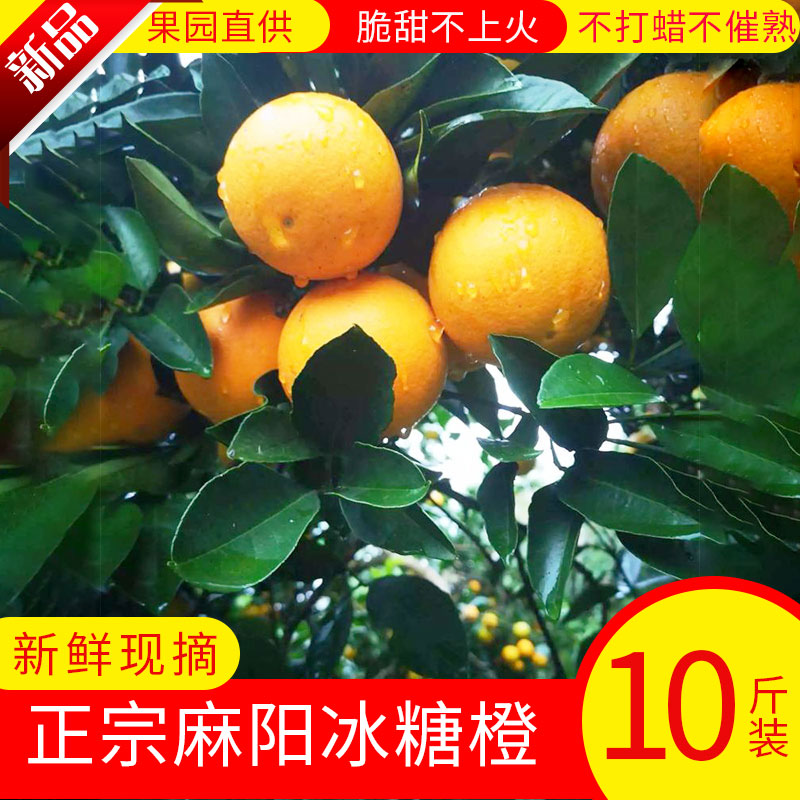 Now picking rock sugar orange Mayang orange pregnant women fruit thin skin juicy hand peeled orange super sweet 10 jin package mail