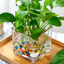 水培器皿创意玻璃花盆水养植物瓶透明花器绿萝白掌花瓶正方形容器