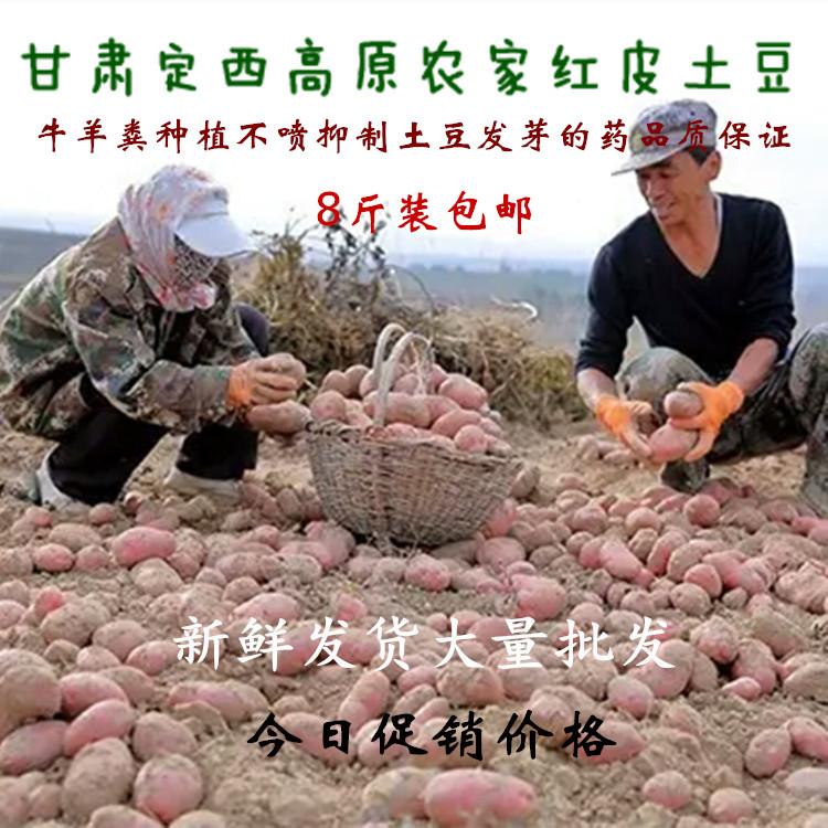 18年甘肃定西红皮土豆高原农家红皮土豆新鲜非转基因土豆宝宝辅食