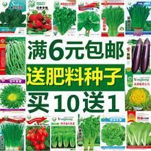 蔬菜种子农家辣椒番茄黄瓜西红柿香菜西瓜草莓四季菜种籽孑大全