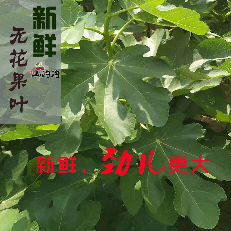 叶子新鲜包邮树叶子干的500g无花果10月29日最新优惠