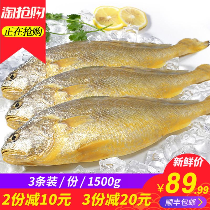 黄花鱼 1500g/3条 新鲜鲜活冷冻海鲜 大黄鱼小黄鱼3斤 顺丰包邮