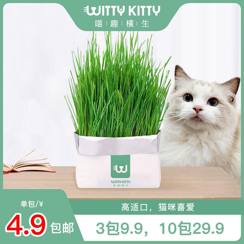 【喵趣横生】种子水盆化毛种植有土猫草