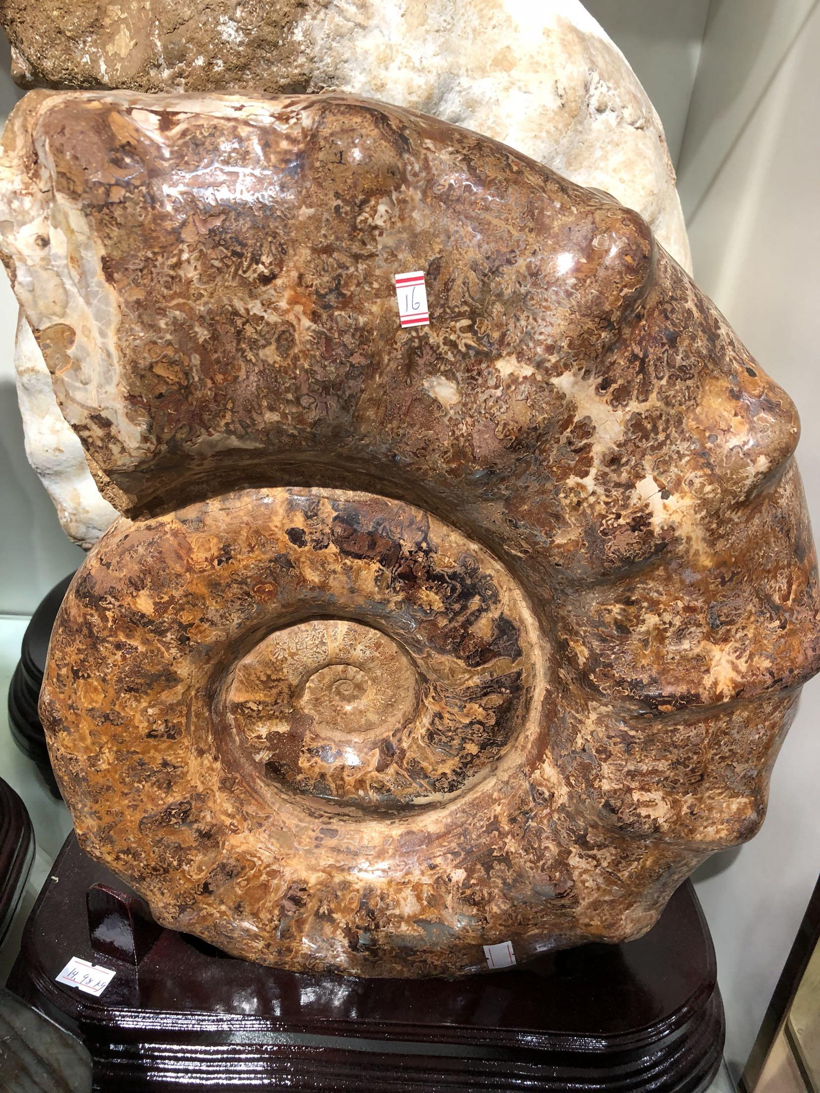Ископаемые Артикул 576689536065