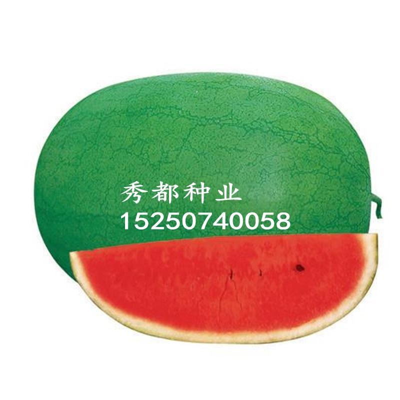 Giant new green dragon overlord watermelon seed dahongbao seed qilinwang lazy man giant up to 30 jin super sweet
