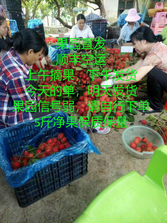 海南三亚保亭特产新鲜热带水果红毛丹5斤毛荔枝顺丰包邮现摘现发