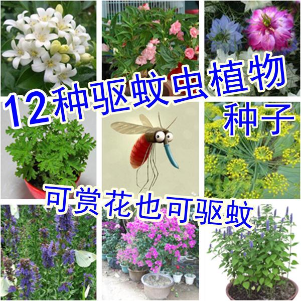 驱蚊草种子花种子花草除虫菊套餐包邮四季播阳台盆栽种籽组合艾草