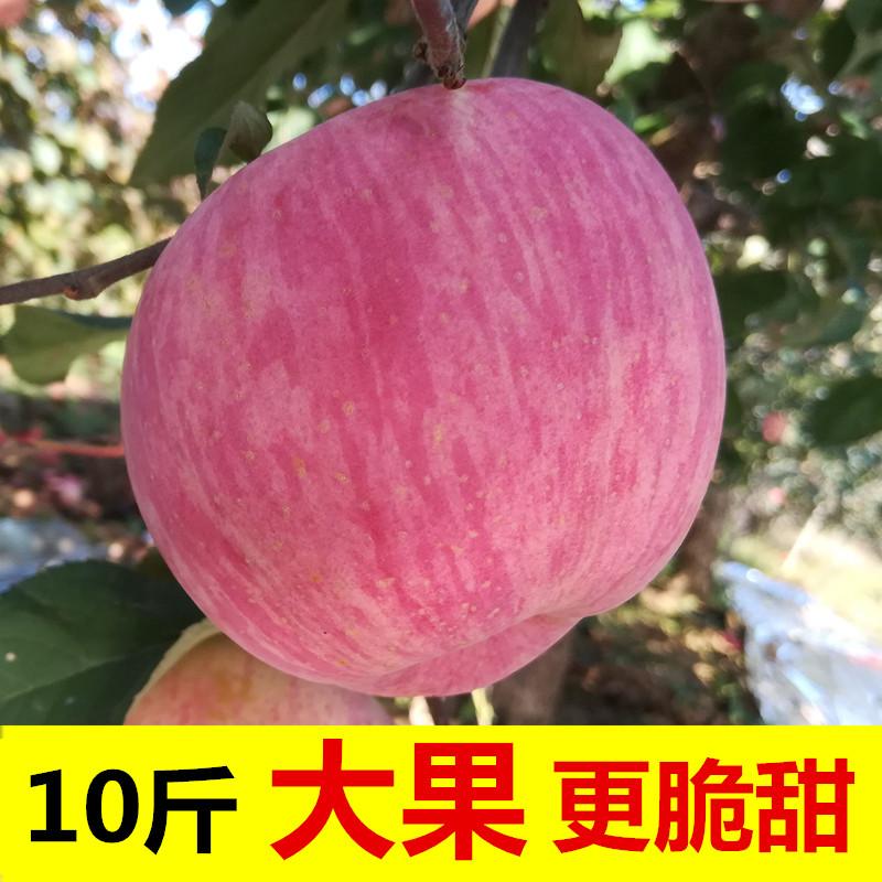 85大果10斤装烟台红富士苹果水果新鲜包邮当季一整箱山东栖霞吃的