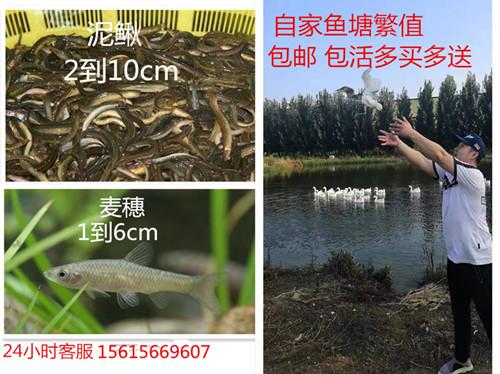 Рыбы Артикул 600290695074
