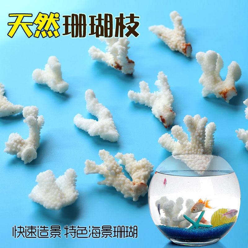 天然白珊瑚鱼缸贝壳海螺水族箱造景家居地中海ins风装饰地台摆设