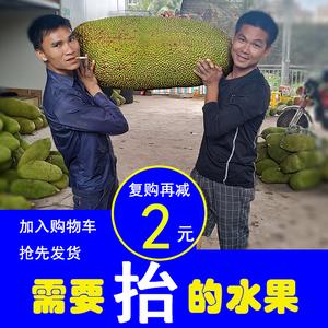 领20元券购买海南三亚新鲜水果黄肉菠萝蜜一整个25斤孕妇水果非泰国越南红肉