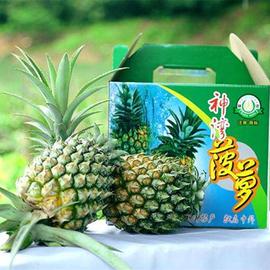 特级大果正宗中山神湾菠萝5斤送刀包邮胜泰国小菠萝海南香水凤梨