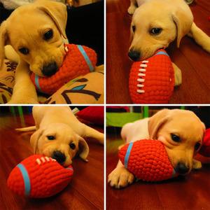 耐咬磨牙发声球柯基幼犬狗狗玩具