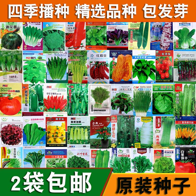蔬菜种子四季播阳台农家庭院盆栽辣椒番茄黄瓜韭菜香菜草莓籽包邮限4000张券