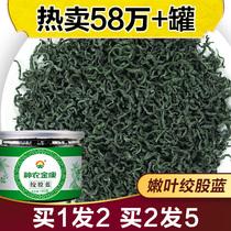 神农金康七叶绞股蓝茶正品旗舰店搭罗布麻