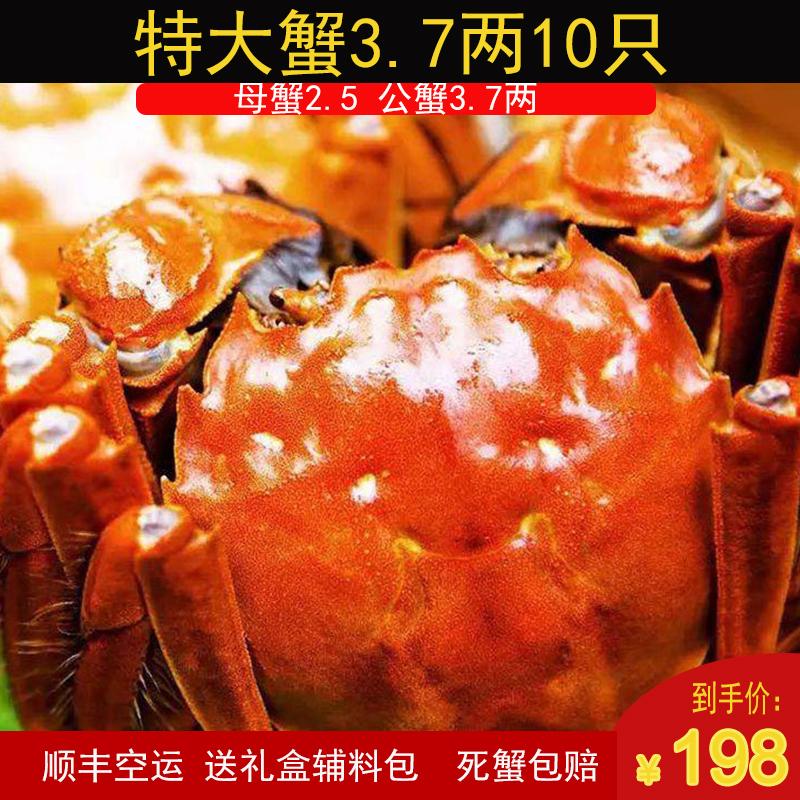 兴化大闸蟹红膏大闸蟹鲜活特大全母蟹全公蟹特大10只礼盒螃蟹水产