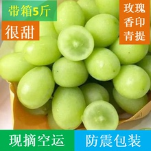 Sunshine rose, grape, printed, green, suitcase, 5 jin, parcel post, now picked, not 10 jin, imported from Japan, seedless