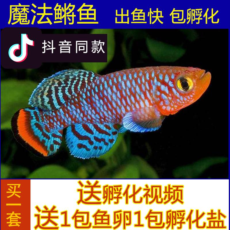 Рыбы Артикул 548501310751