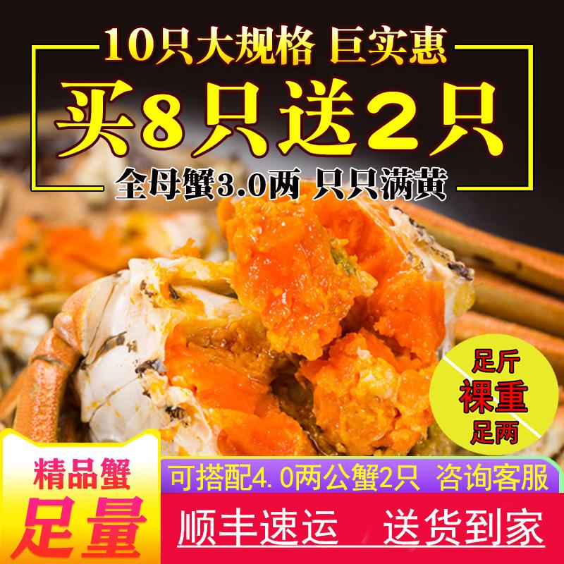 现货买8送2大闸蟹全母蟹3.0两共10只礼盒装鲜活特大活的母螃蟹