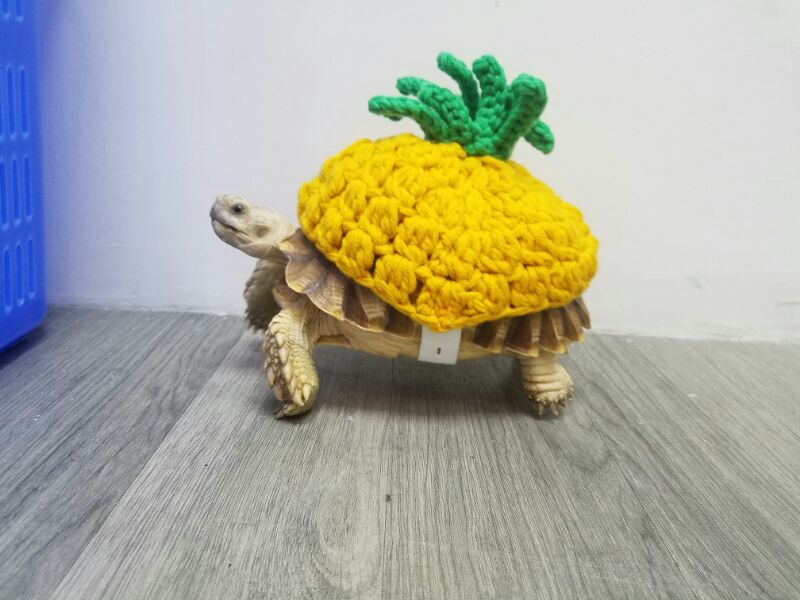 Tailor made pineapple shaped tortoise clothes tortoise cat small dog pet clothing pure handmade vest hat