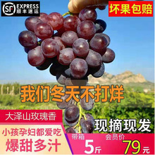 Rose flavor grape, a special product of Shandong Province, fresh grape in Dazeshan, Pingdu