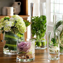 Creative glass vase decoration living room table flower arrangement hydroponic green lo glass bottle rich bamboo transparent simple home