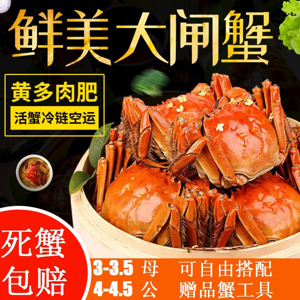 现货鲜活红膏大闸蟹螃蟹全母3-3.5两10只礼盒装顺丰包邮发新疆