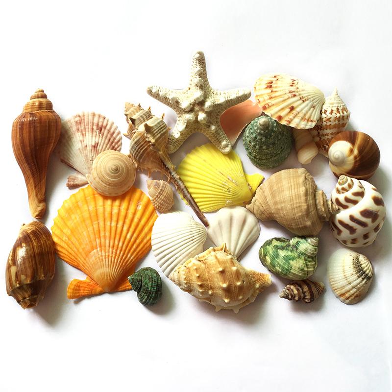 包邮天然贝壳海螺海星珊瑚套餐打孔鱼缸造景装饰卷贝鱼寄居蟹换壳