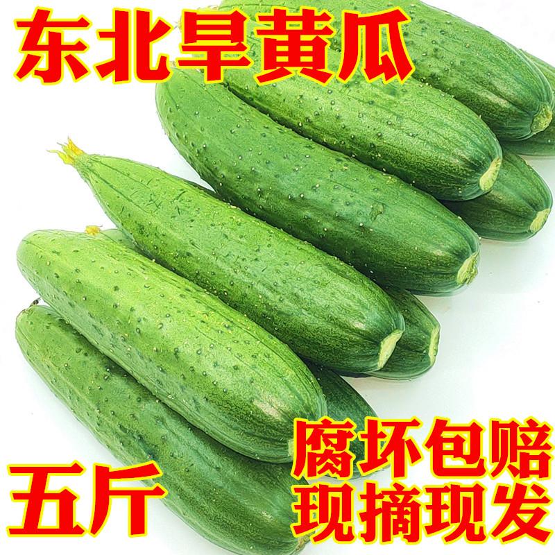 东北旱黄瓜 新鲜小黄瓜汗汉黄瓜农家新鲜蔬菜水果特产美食脆皮5斤