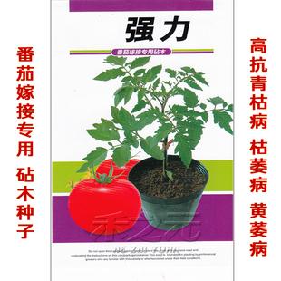 新货强力番茄砧木种子 西红柿嫁接专用  高抗青枯病枯萎病黄萎病