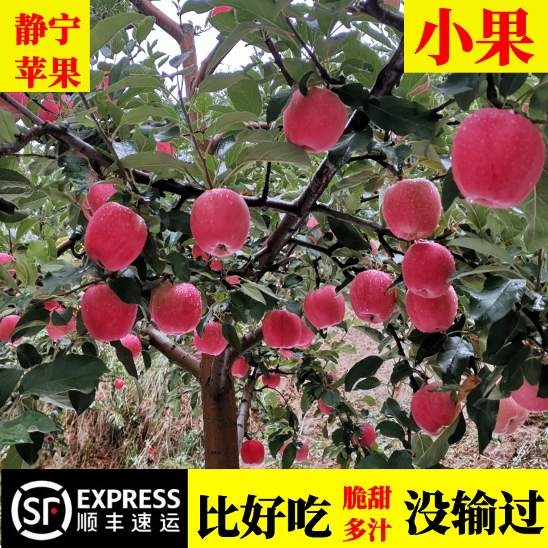 Jingning apple, a special product of Gansu Province, is a fresh ten jin box fruit. It is not a fruit of Shaanxi Red Fuji rock sugar