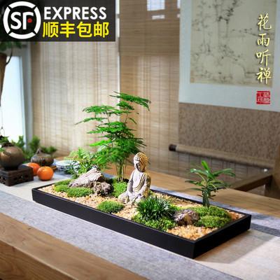 花雨听禅中式枯山水盆景组合盆栽文竹苔藓微景观菖蒲微型禅意茶室