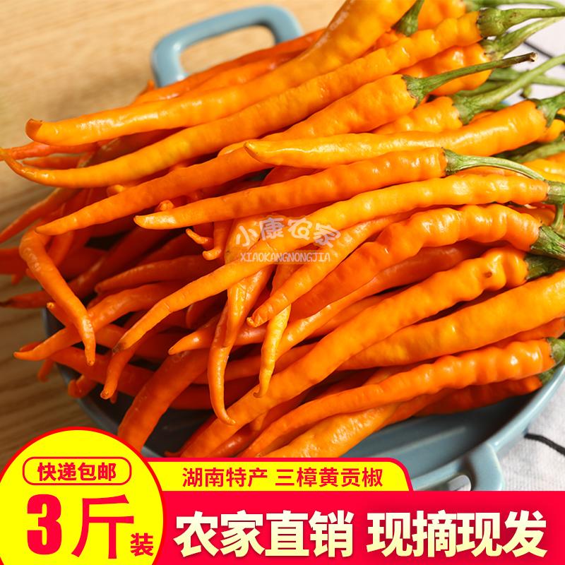 衡东三樟黄贡椒新鲜 原产地直供湖南辣椒土菜黄辣椒黄椒子包邮