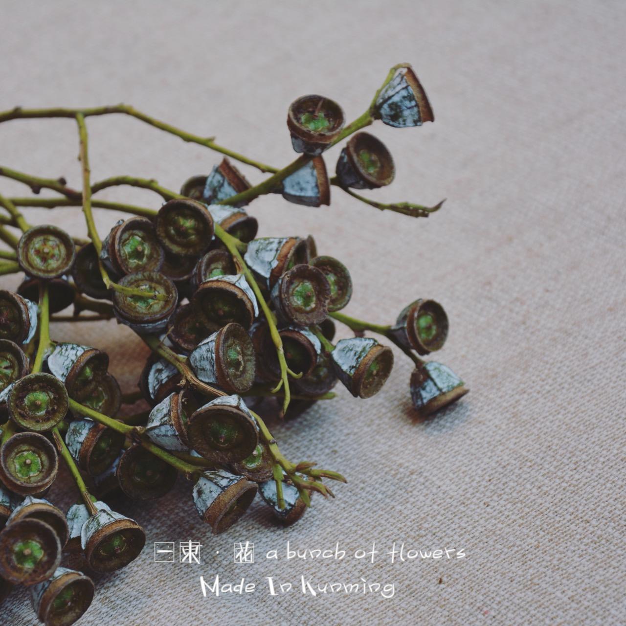 Эвкалипт монеты фрукты сухие цветы вечная жизнь цветок букет магазин домой дизайн комната мягкий наряд цветочная композиция стрельба реквизит