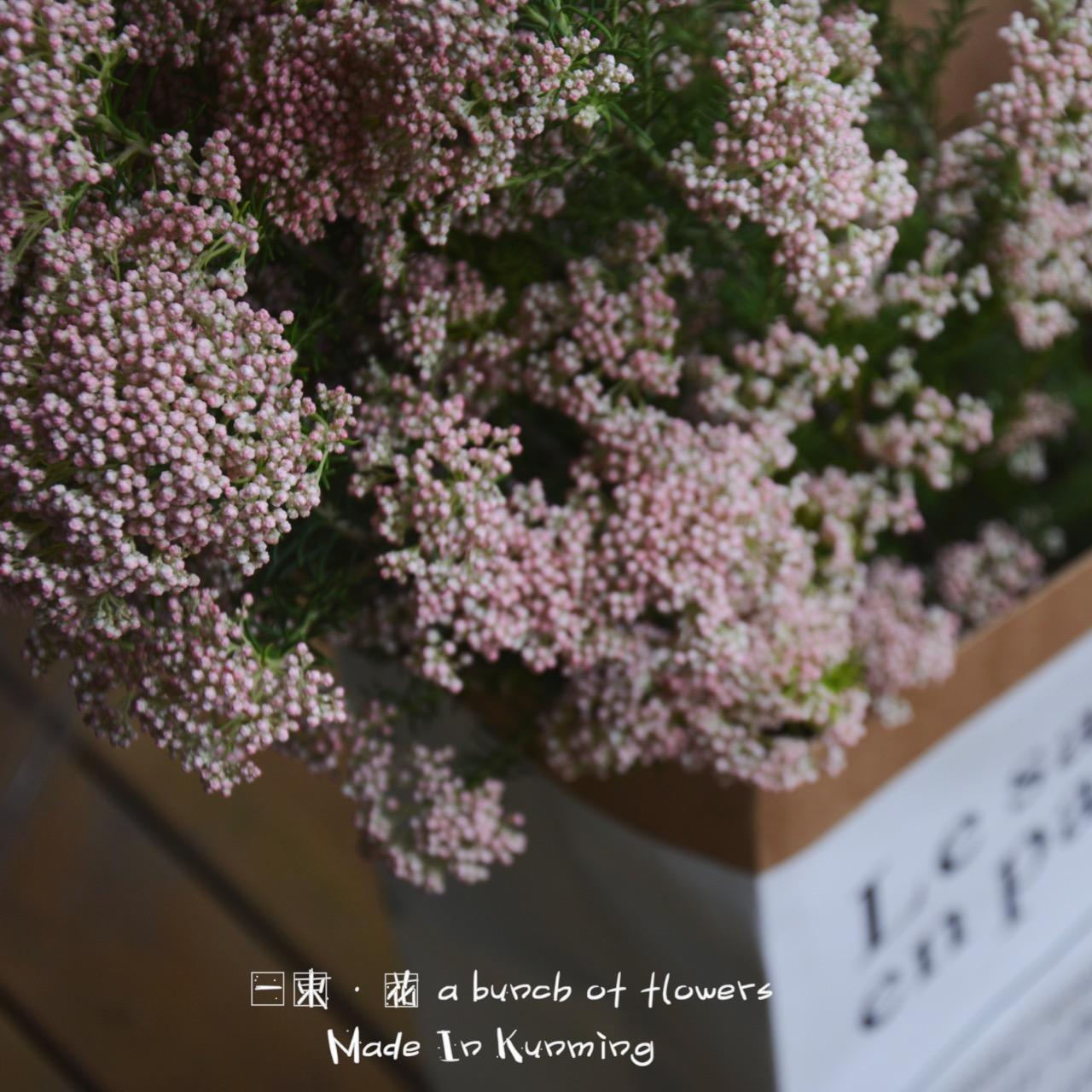 Романтическая вишня рисовая сторона цветок сухие цветы природный высушенный один литература и искусство цветочная композиция нордический ветер стрельба реквизит с цветами