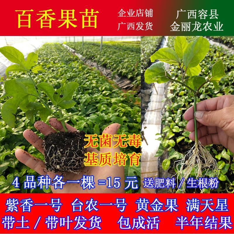 百香果苗黄金果苗绿皮百果苗紫香嫁接台农一号四季果树苗当年结果