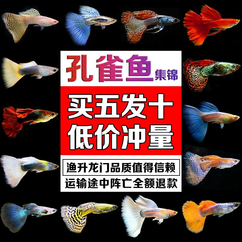 Рыбы Артикул 593622867703