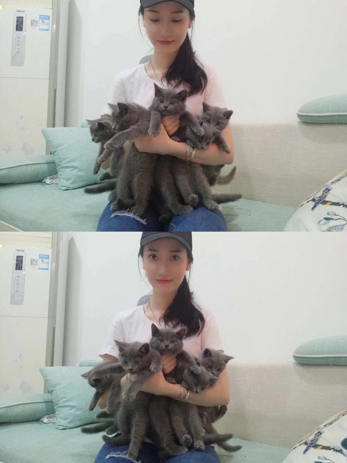 广州珠海深圳包子脸纯种蓝猫网红猫同款可上门取猫活体健康DD弟弟